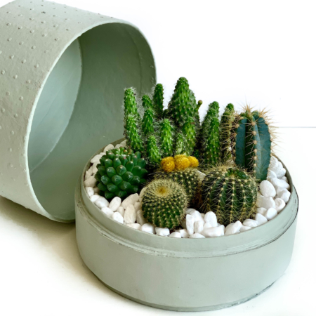 mint green box with cacti