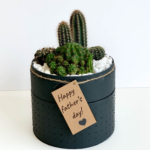 Midi Succulent mix in a charcoal handmade pot, midi jungle cacti mix with personalised gift card. Biodegradable and recycled pot. Long-lasting and sustainable plant gift.