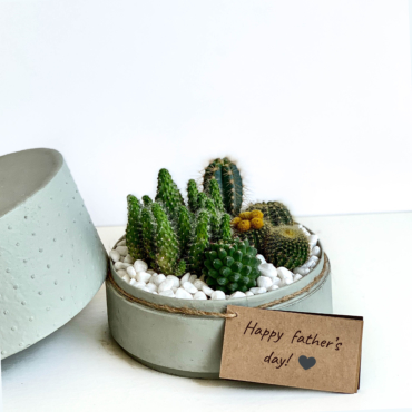 Midi Succulent mix in a mint green handmade pot, midi jungle cacti mix with personalised gift card. Biodegradable and recycled pot. Long-lasting and sustainable plant gift.