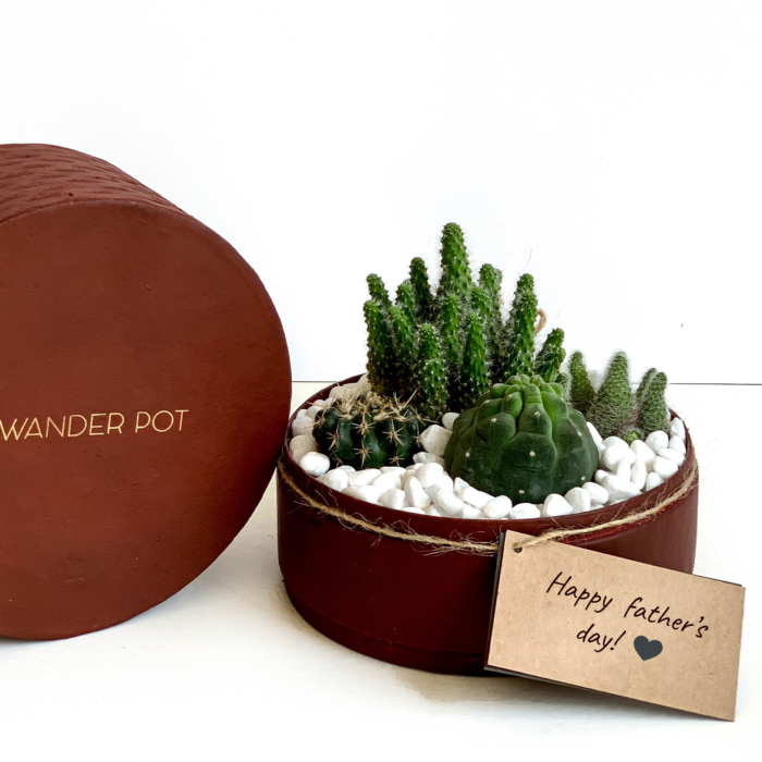 Midi Succulent mix in a red handmade pot, midi jungle cacti mix with lid and personalised gift card. Biodegradable and recycled pot. Long-lasting and sustainable plant gift.
