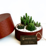 Landscape view of Midi Succulent mix in a red handmade pot, midi jungle cacti mix with lid and personalised gift card. Biodegradable and recycled pot. Long-lasting and sustainable plant gift.