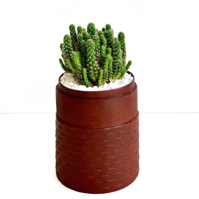 Portrait view of mini fairy castle cactus in a red handmade pot, Acanthocereus, cereus with lid. Biodegradable and recycled pot. Long-lasting and memorable sustainable plant gift.