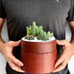 Midi Succulent mix in a red handmade pot, midi jungle cacti mix with lid held in hands. Biodegradable and recycled pot. Long-lasting and sustainable plant gift.