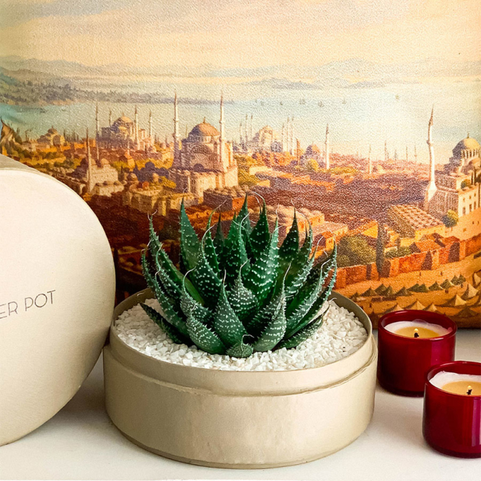 Aloe Aristata in a latte handmade pot, Lace Aloe with Lid and red candles. Biodegradable and recycled pot. Long-lasting and sustainable plant gift.