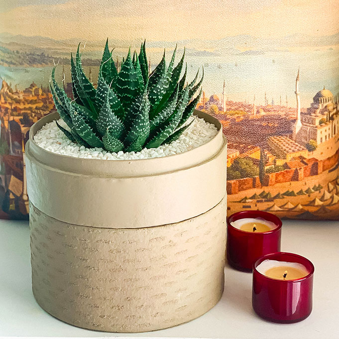 Portrait View of Aloe Aristata in a latte handmade pot, Lace Aloe with Lid and red candles. Biodegradable and recycled pot. Long-lasting and sustainable plant gift.