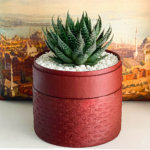 Aloe Aristata in a red handmade pot with a free gift card/personalised message, Lace Aloe. Biodegradable and recycled pot. Long-lasting and sustainable plant gift.