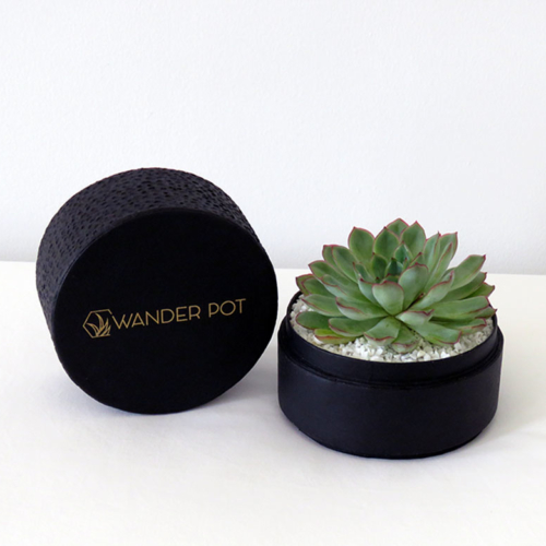 Landscape view of Midi Echeveria in a black handmade pot, cute succulent with lid. Biodegradable and recycled pot. Long-lasting and sustainable plant gift.