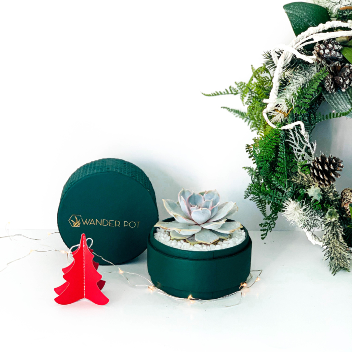 Sustainable corporate plant gifts - Festive Gifts - Plant gift ideas - WANDER POT-14