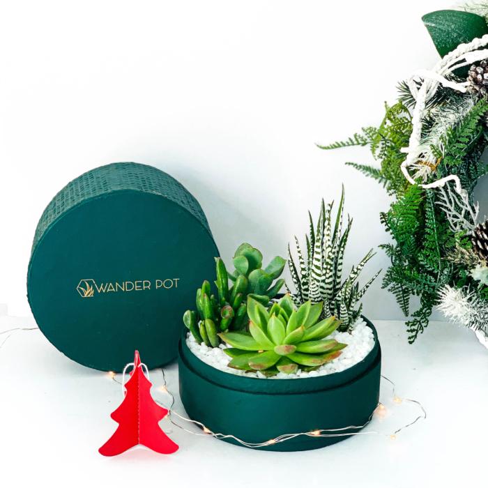 Midi Succulent Mix - Rich Green - Festive Gifts
