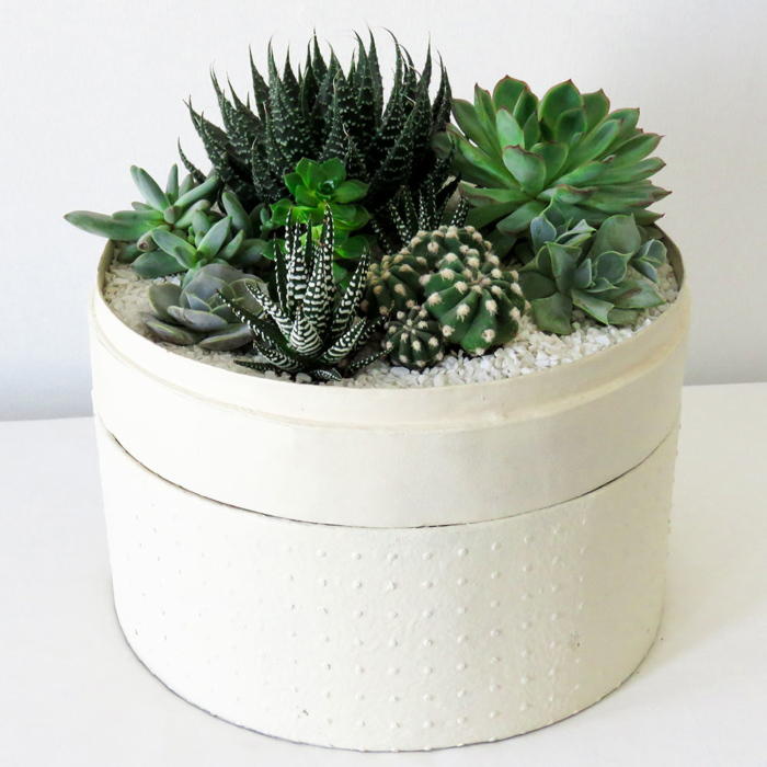 Portrait view of Lush Succulent mix in a warm white handmade pot as centrepiece, cacti mix with lid. Biodegradable and Recycled Pot. Long-lasting and sustainable plant gift.