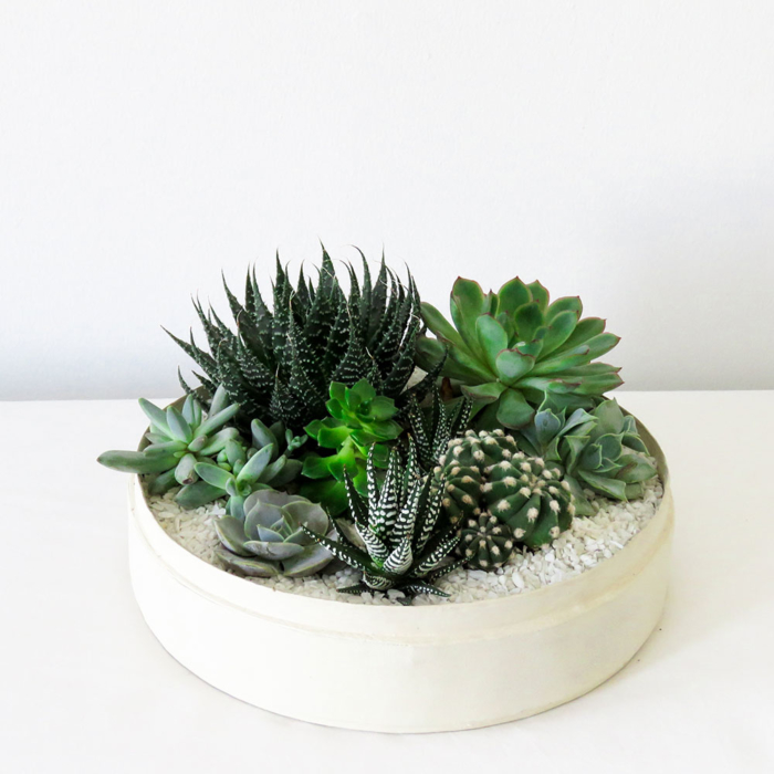 Lush Succulent mix in a warm white handmade pot, cacti mix with lid. Biodegradable and Recycled Pot. Long-lasting and sustainable plant gift.