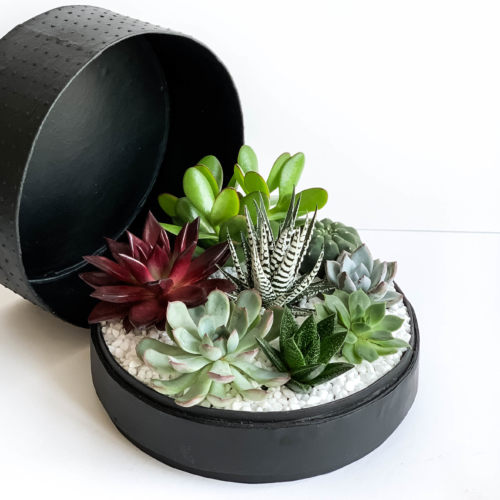 Aerial view of Lush Succulent mix in a black handmade pot, cacti mix with lid. Biodegradable and Recycled Pot. Long-lasting and sustainable plant gift.