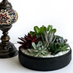 Landscape view of Lush Succulent mix in a black handmade pot, cacti mix with centrepiece lamp. Biodegradable and Recycled Pot. Long-lasting and sustainable plant gift.