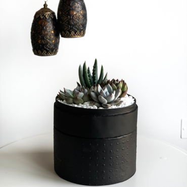 Midi Succulent mix in a black handmade pot, midi jungle cacti mix with lights in the background. Biodegradable and recycled pot. Long-lasting and sustainable plant gift.