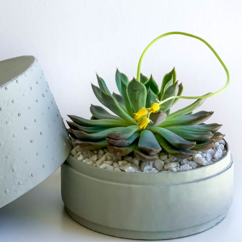 Landscape view of Midi Echeveria in a mint green handmade pot, cute succulent with lid. Biodegradable and recycled pot. Long-lasting and memorable sustainable plant gift.