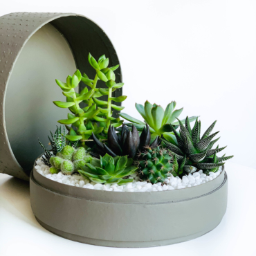 Lush Succulent mix in a grey handmade pot, cacti mix with lid. Biodegradable and Recycled Pot. Long-lasting and sustainable plant gift.