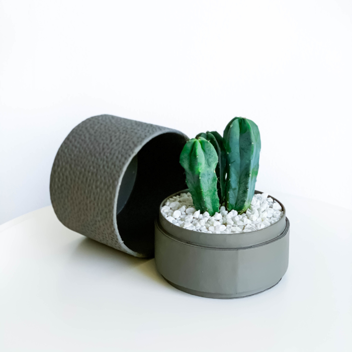 Mini Blue candle Cactus in a grey handmade pot, Myrtillocactus geometrizans with lid. Biodegradable and recycled pot. Long-lasting and sustainable plant gift.