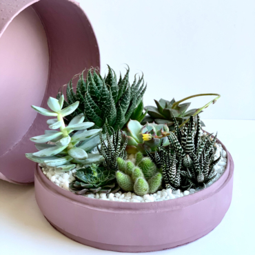 Lush Succulent mix in a dust pink handmade pot, cacti mix with lid. Biodegradable and Recycled Pot. Long-lasting and sustainable plant gift.