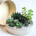 Aerial view of Lush Succulent mix in a warm white handmade pot, cacti mix with lid. Biodegradable and Recycled Pot. Long-lasting and sustainable plant gift.