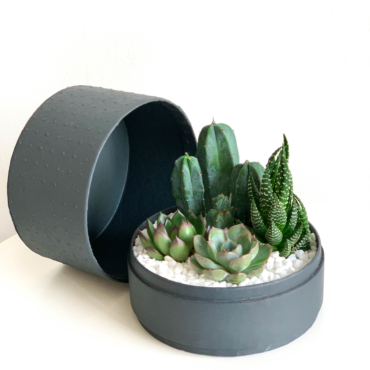 Midi Succulent mix in a charcoal handmade pot, midi jungle cacti mix with lid. Biodegradable and recycled pot. Long-lasting and sustainable plant gift.