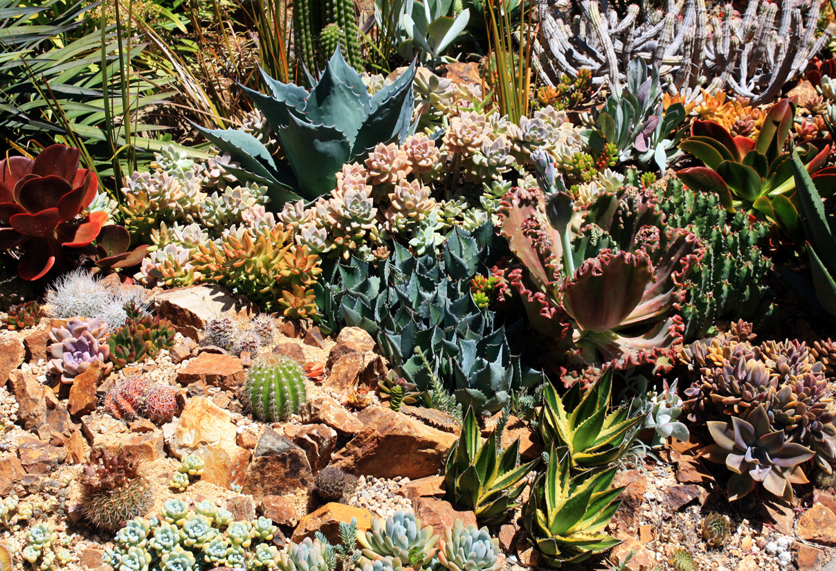 succulents in the wild